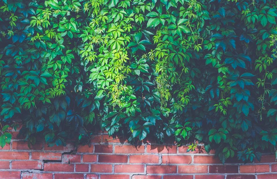 isoleren met planten